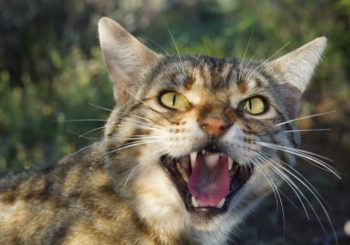 Council to begin feral cat trapping trial